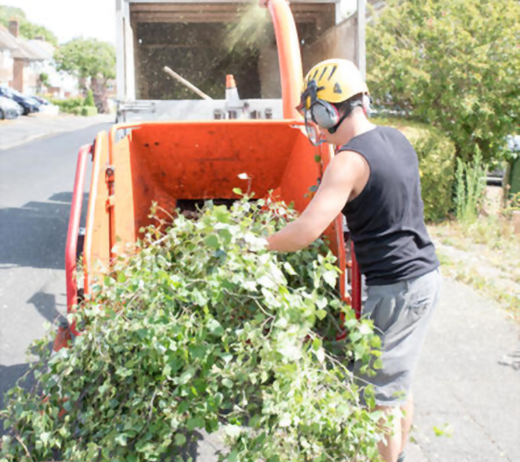 How to Choose a Better Tree Service Company