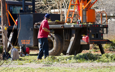 How Tree Trimming Services Can Make Your Work Easy