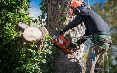 The Most Common Reasons for Tree Removal