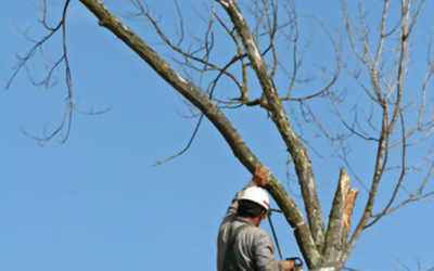 Tree Trimming – Things Worth Considering