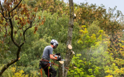 What You Need to Know About Tree Removal