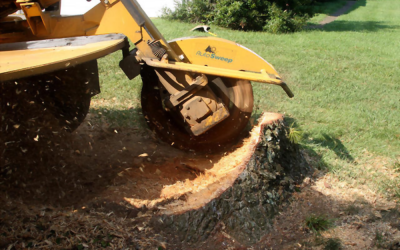 Reasons Why You Should Hire a Professional Tree Removal Service