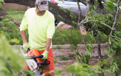 What to Consider Before Tree Removal