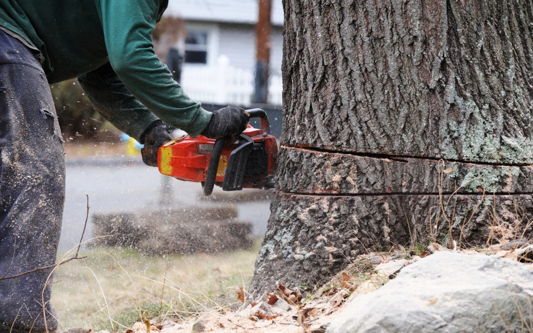 What Is the Safest Way Remove an Ash Tree?