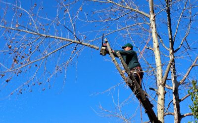 Reasons Why You Should Hire a Professional Tree Trimmer